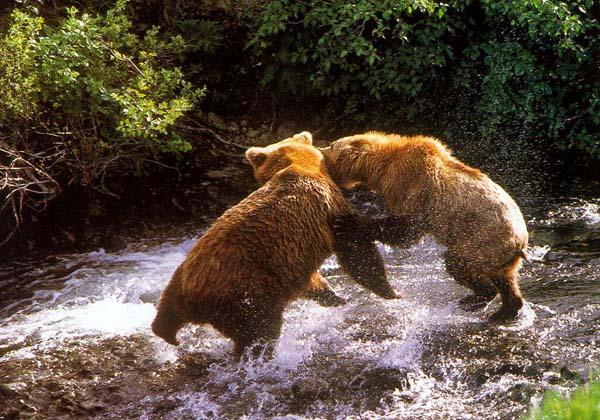 http://www.zoobiz.ru/bear/bearearth/B47.JPG
