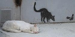 возраст кошек