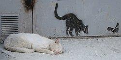 блохи у кошки