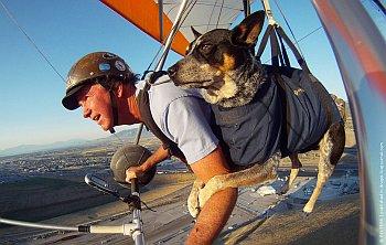 Дэн Мак-Манус и его служебная собака Тень летают вместе на дельтаплане около Солт-Лейк-Сити, штат Юта. JIM URQUHART/REUTERS