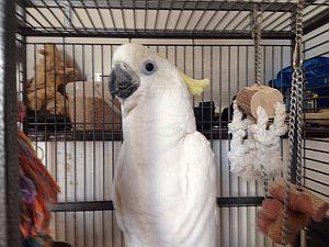 содержание птиц