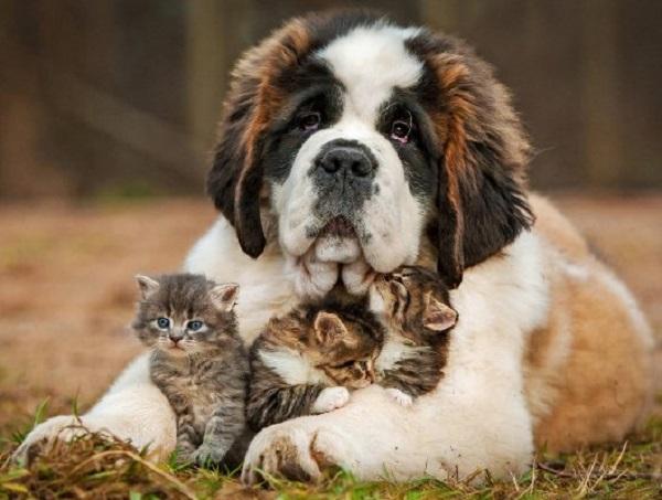 клиники для собак