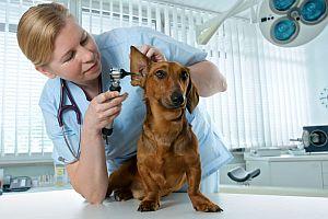 ветеринар на работе