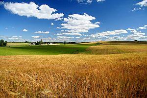 земли сельскохозяйственного назначения